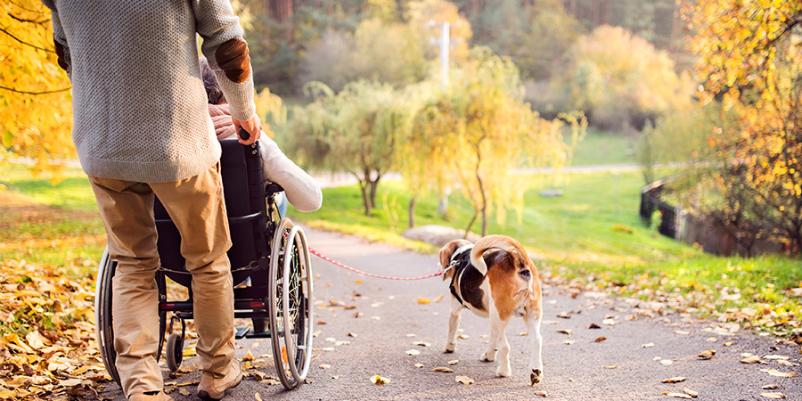Man pushing an elderly person in a wheelchair and walking the dog